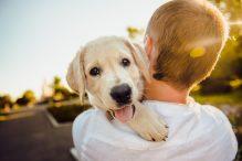 Prasideda registracija į gyvūnų terapijos mokslinį tyrimą
