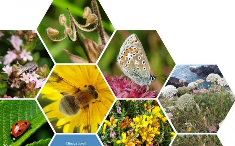 Pasaulio sveikatos organizacijos parengtoje ataskaitoje – apie gamtos ir biologinės įvairovės poveikį visuomenės sveikatai